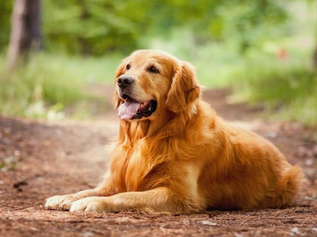 DogConseil : la passion au service des animaux